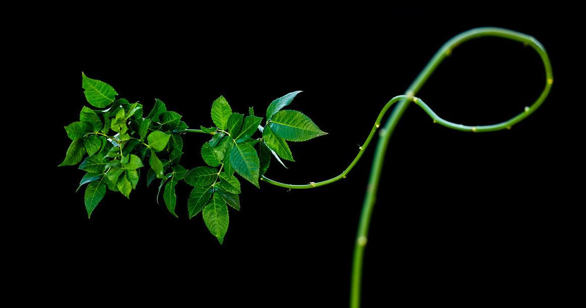 rosa smeralda green show